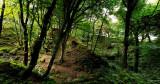 Woodland walk, Ballaragh