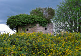 Undercover - Pill Box, west of Aboyne