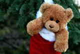 Toutounet Noël