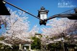 kyoto_074.jpg