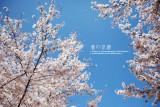 kyoto_075.jpg