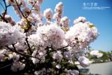 kyoto_088.jpg