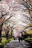 kyoto_093.jpg