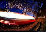 阿里山•2008春