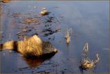 Wood Weeds  Water.jpg