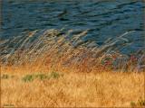 Dry Grass  Water.jpg