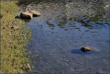 Water Rocks  Weeds.jpg
