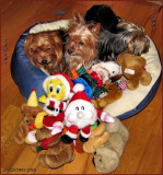 Tiggy Tedley  Timmy Christmas 2009