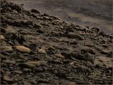 Rocks Low Tide Winchester Bay