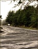 ATV Trail in the rain.jpg