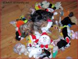 Timmy  his toys.jpg