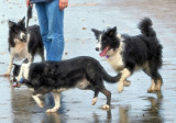 Buddy,  Tess, &    Liz On The Beach in NZ.jpg