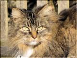 MITSI cat 13310  Robert