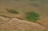 Siuslaw River Grass