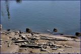 Low Tide Siuslaw River