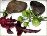 red lettuce green tomatoes rocks 975.jpg