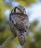 DANISH BIRDS 2005