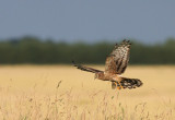 DANISH BIRDS 2008