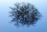 Flooded Blackthorn