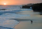 Pacific Sunset, Santa Cruz, CA