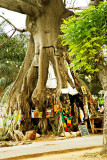 Tree Shop