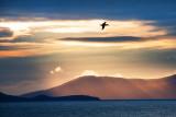 Gannet Sky