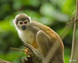 Ecuador Jungle and Galapagos