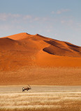 Lone Oryx in the Dunes