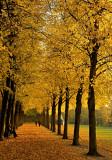 Søndermarken in Autumn Colours