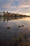 Lake Peblinge and three ducks