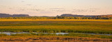 Hawk Dreaming wetlands panorama