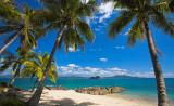 Palm Trees at Muggy Muggy Beach