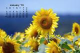 2010 Sunflower Calendar
