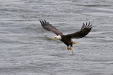 Eagle's Catch