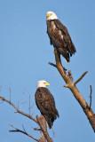 Happy Eagle Pair