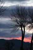 Ferruginous Hawk Roost at Sunset