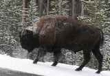 Yellowstone Country 2008: From A to Z