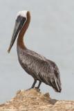 Commoner and more widespread birds in Cuba