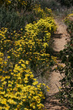 Yellow Lined Trail