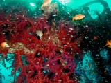 Soft corals and a variety of fish