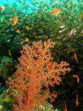 Diving In Eilat/Red Sea