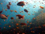Fuji F31fd Underwater