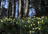 wildflowers - yellows