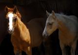 Wild Horse Sanctuary of the Black Hills