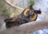 California bird watching