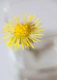 Study of a Little Yellow Flower #3