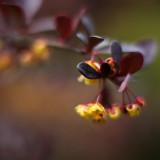 Yellow-flowered Bush #2