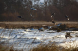 Gulls Along The South Shore