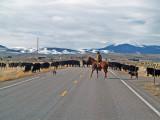 Montana Crosswalk