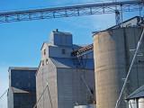 Big Wheat